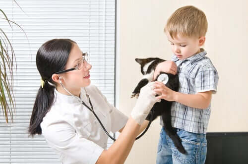 Una veterinaria controlla un gatto