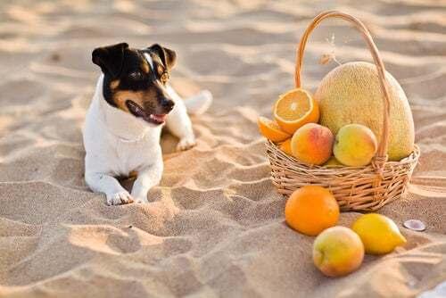Vitamina C nei cani