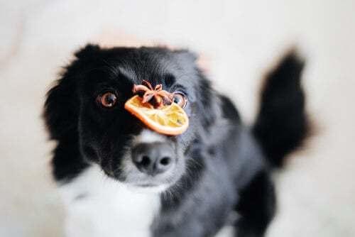 Benefici della vitamina C per i cani