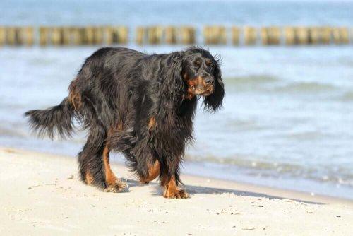 Cane che passeggia sulla spiaggia
