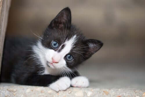 Gattino abbandonato bianco e nero