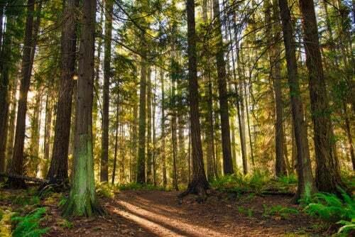 Le foreste di Vancouver