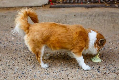 Le principali cause di vomito nei cuccioli