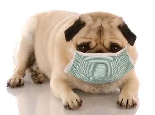 Problemi di salute canina causati da ambienti sporchi