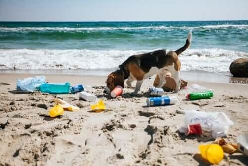 la contaminazione ambientale coinvolge anche la salute canina