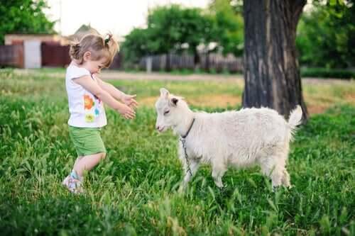 Alle capre piacciono le persone sorridenti