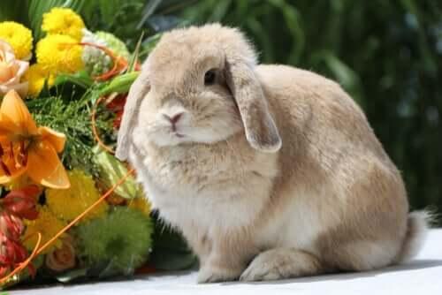Coniglio ariete vicino a un mazzo di fiori