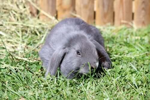 Coniglietto grigio in un prato