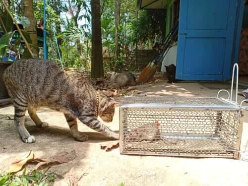 Leptospirosi nei gatti: sintomi e trattamento