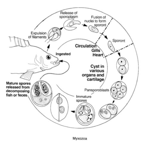 Contagio parassiti
