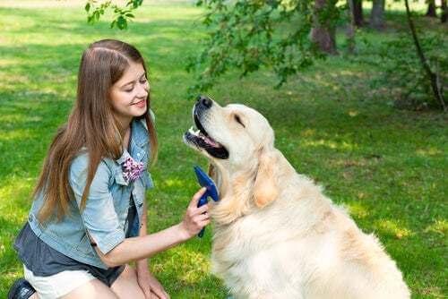 Donna che spazzola il cane
