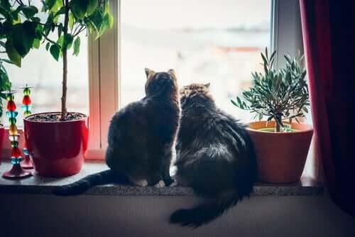 l'odore emanato dal posteriore di alcuni gatti è un mezzo che impiegano per riconoscersi tra loro