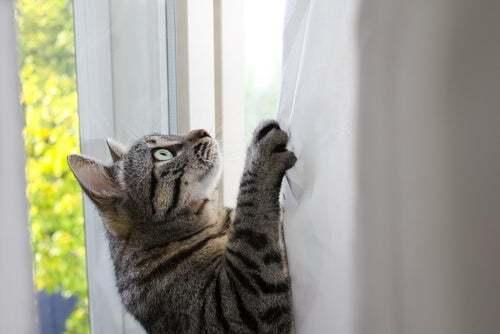 Perché i gatti sono così agili? Ve lo spieghiamo qui