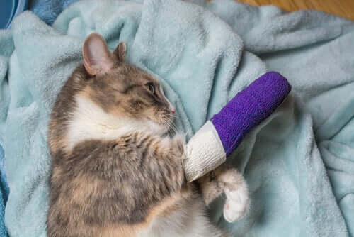 Gatti zoppicanti: cause comuni e trattamento