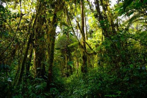 Le foreste più ricche di biodiversità del pianeta