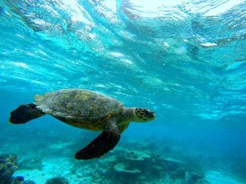Il guscio della tartaruga, una struttura unica nel regno animale