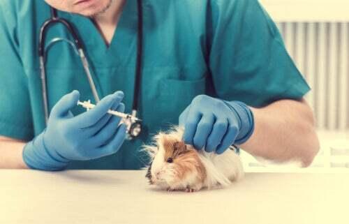 Iniezione dal veterinario