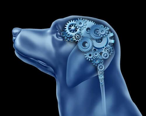 I cani possono soffrire di disturbo ossessivo-compulsivo?