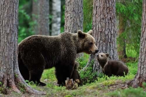 Video virale dell'orso nella neve: non è come sembra