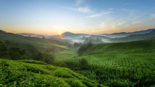 La catena alimentare e la sua importanza in natura