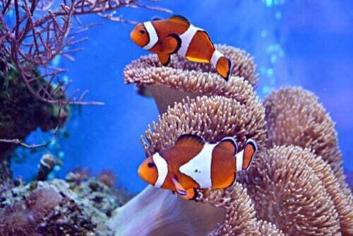 L'incredibile relazione tra il pesce pagliaccio e l'anemone di mare