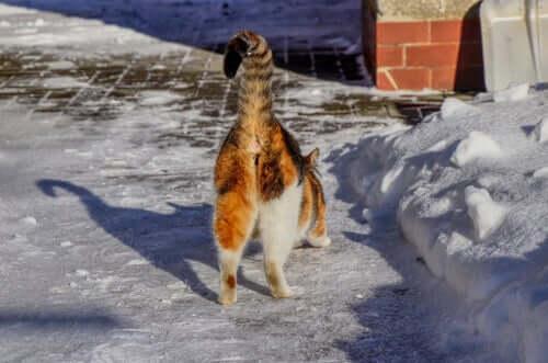 Perché il posteriore di alcuni gatti emana un cattivo odore?