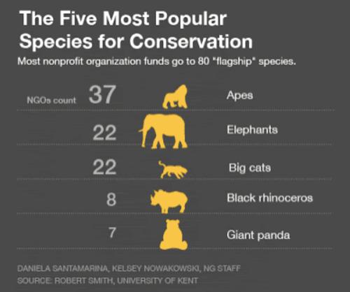 Specie animali e biodiversità: le specie bandiera