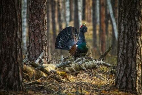 Specie animali e biodiversità: uccello in un bosco