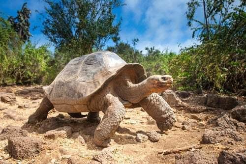 Struttura del guscio di tartaruga