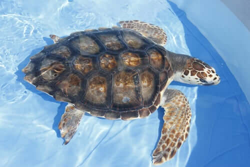 Tartaruga acquatica in una vasca