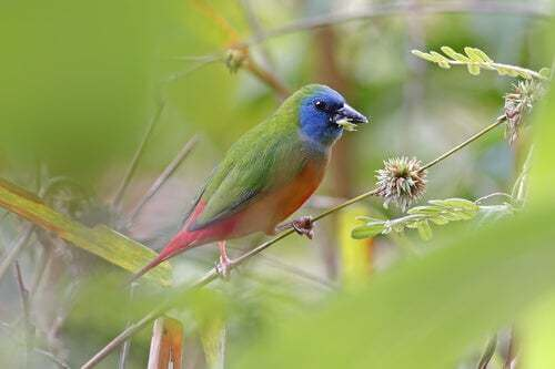 6 specie di uccelli tropicali da conoscere