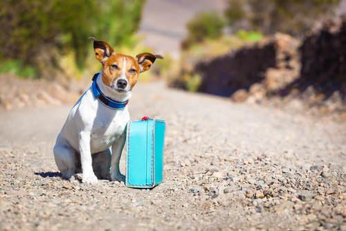 Cane con una piccola valigia per strada.