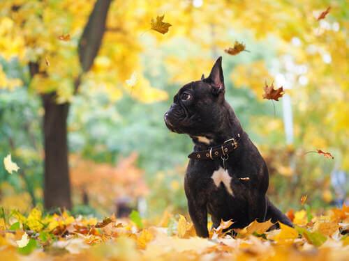 Cane in autunno con le foglie.