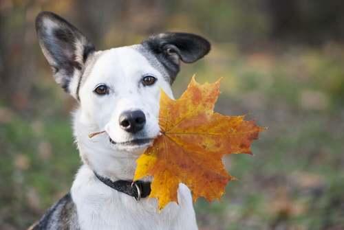 Cosa deve mangiare il cane in autunno?