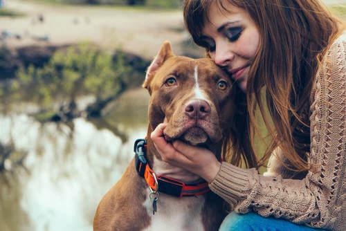 Vantaggi e svantaggi dell'adottare un cane adulto