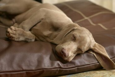 Tappeto o cuscino: cosa scegliere per il cane?