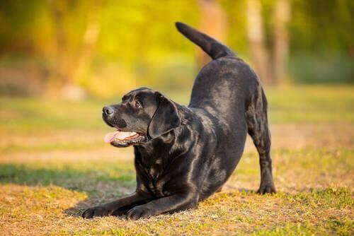 Quanto spazio serve per un cane di grossa taglia?