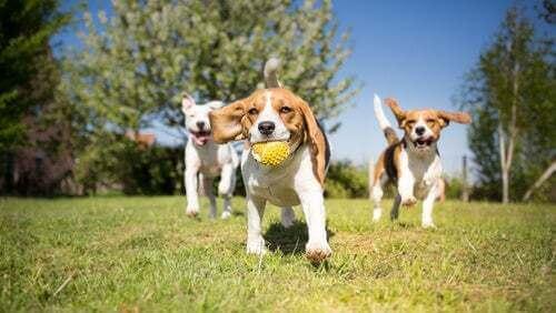 Come dovrebbe essere un parco per cani