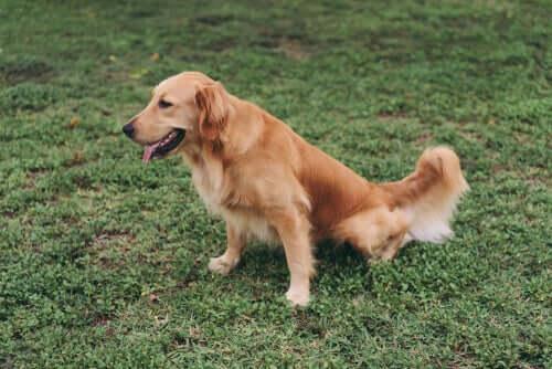 La dieta per i cani che soffrono di malattie renali