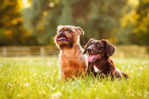 Cani seduti nel parco