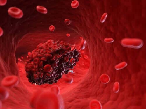Coaguli di sangue nel cane: un rischio per la salute
