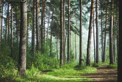 Uomo che piantò un bosco