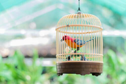 5 passaggi per pulire la gabbia degli uccelli