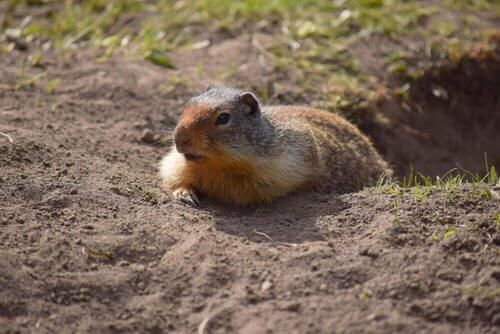 Habitat dello scoiattolo