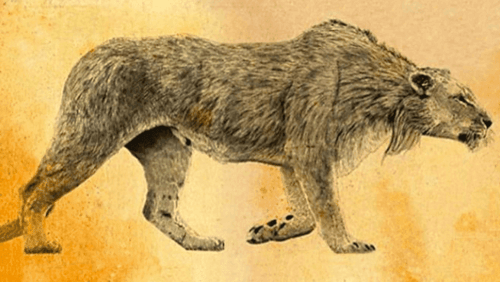 Il leone delle caverne: il predatore che terrorizzava i nostri antenati