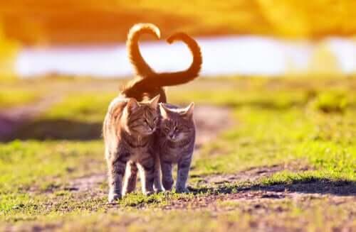 Il linguaggio della coda del gatto e i suoi significati