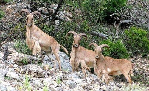 Animali selvatici e macchia mediterranea