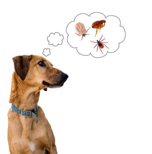 Parassiti del cane