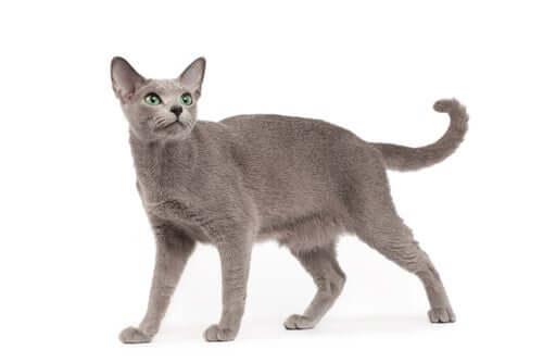 Le diverse posizioni della coda del gatto