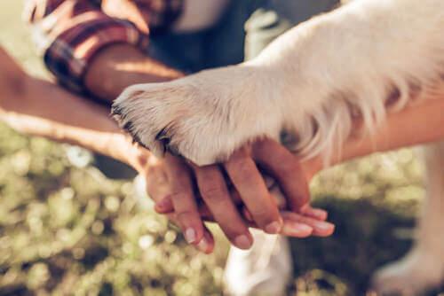 Quando inizia il rapporto tra il cane e l'uomo?